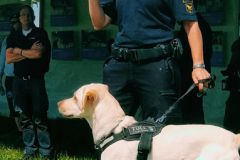 polis-m-hund